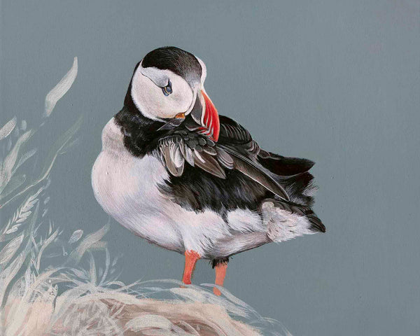 Puffin Grooming Giclee print