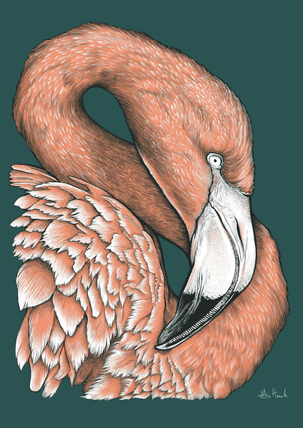 SALE Flamingo A3 print