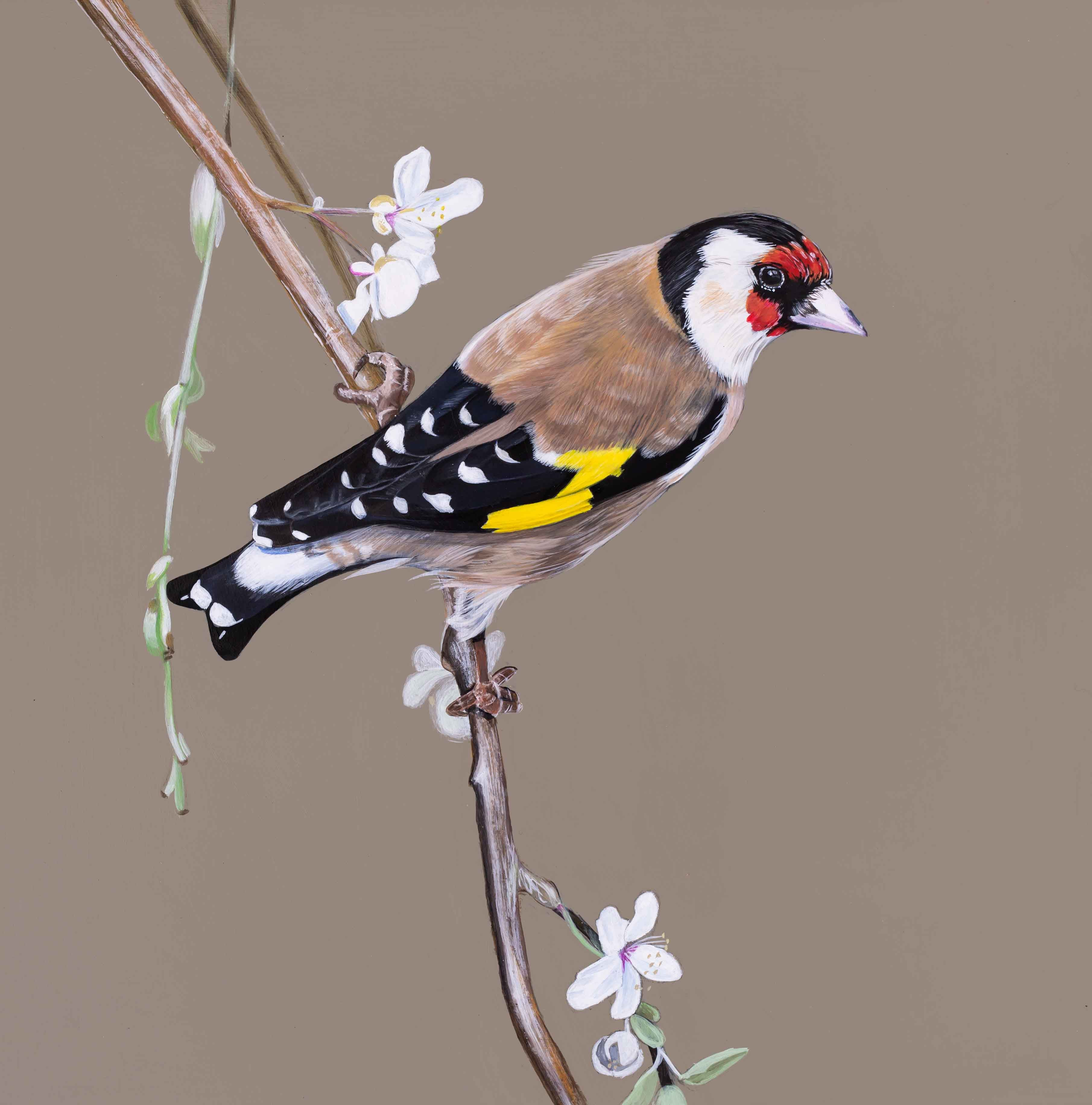 Goldfinch and blossoms Giclee print