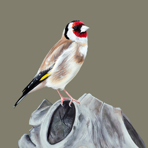 Goldfinch, the little poet, Giclee print