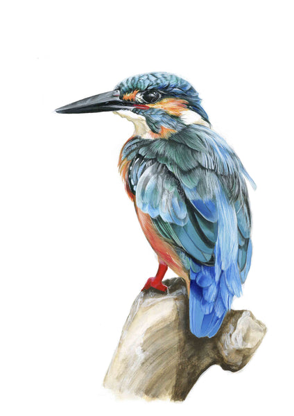 KING FISHER Giclee print