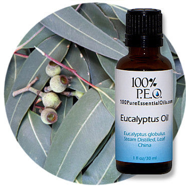 Buy Eucalyptus Leaf Essential Oil, 1oz=>1 Gallon, Wholesale