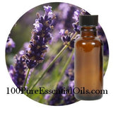 Buy French Lavender Oil, 1/2 oz (15ml)