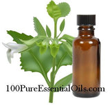 True Melissa Oil, Lemon Balm 1ml=> 16oz Bulk