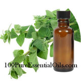 Oil of Oregano (originum vulgare) High Carvacrol 80+%