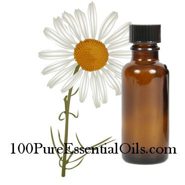 Buy Roman Chamomile Essential Oil