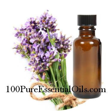 Buy Lavender Essential Oil 40/42,  1/2 oz => 1 Gallon