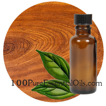 Buy Camphor Essential Oil 1oz=>1 Gallon, Bulk