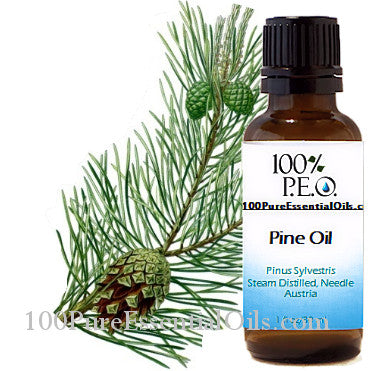 Wholesale Scotch Pine Needle Oil 1 oz -32 oz Bulk