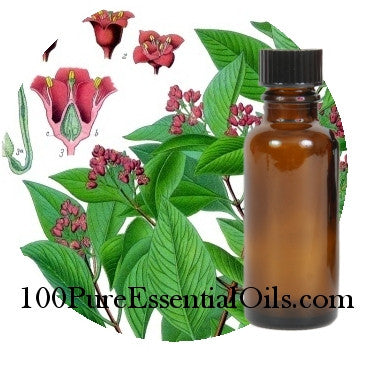 Wholesale Sandalwood Oil 32 oz, santalum album