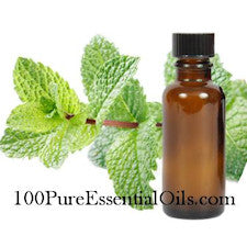 Wholesale Spearmint Essential Oil of Mentha Spicata (high carvone)