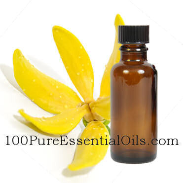 Buy Ylang Ylang Oil Gallon - cananga odorata genuina wholesale
