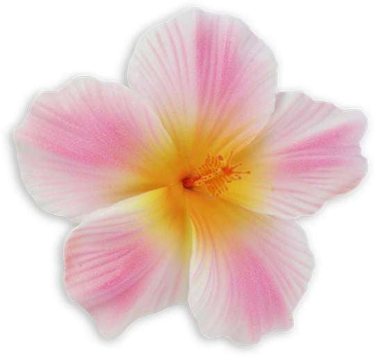 White Pink Large Hawaiian Hibiscus Flower hair clip
