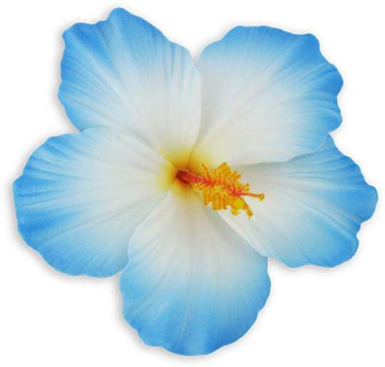 Large White Blue Hibiscus Flower Hair Clip Kapo Trading