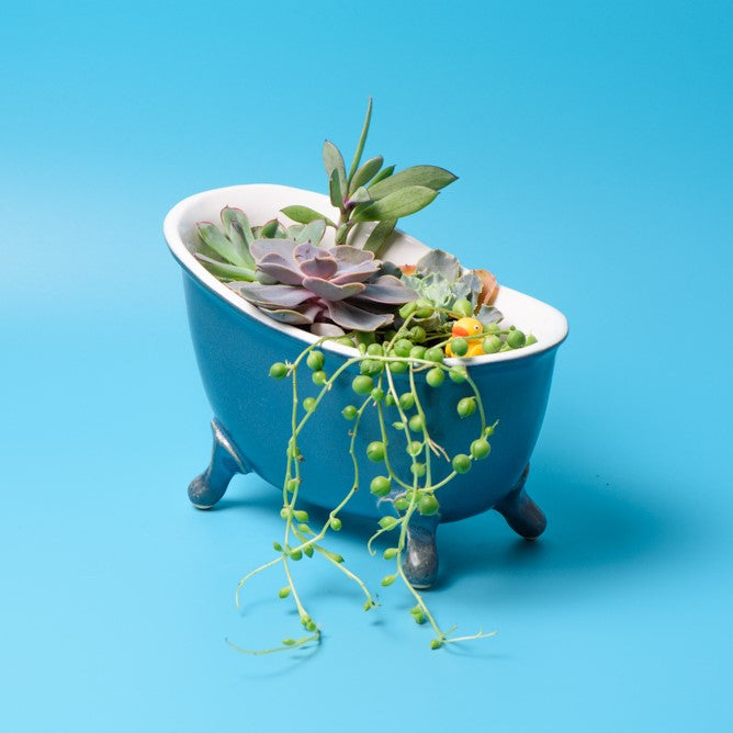 Bath pot for succulents - 1