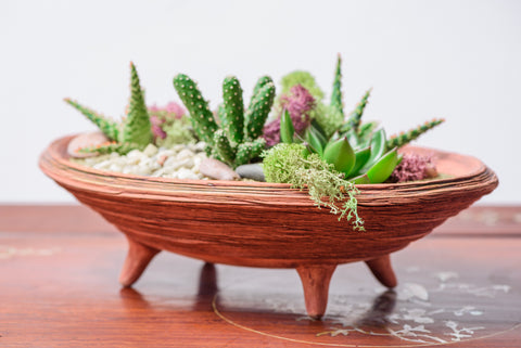 Plate for succulent