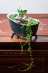 Bath pot for succulents - 2