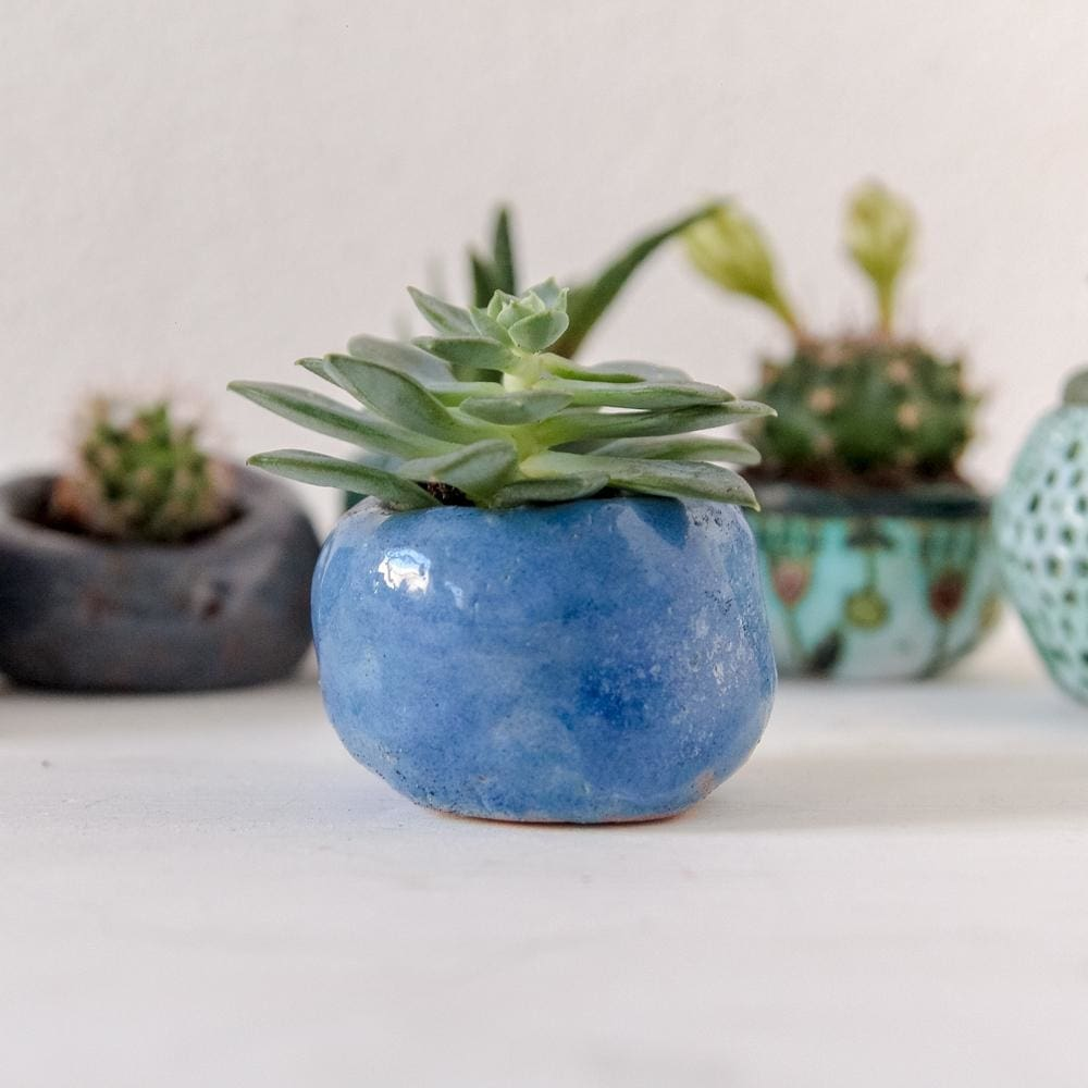 where to buy pots for plants