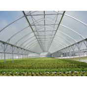 Igloo Film -Adloheat-Horticultural-And-Agricultural-Products