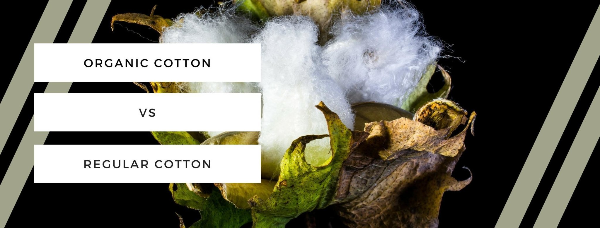 ORGANIC COTTON VS REGULAR COTTON | TheProudLondon