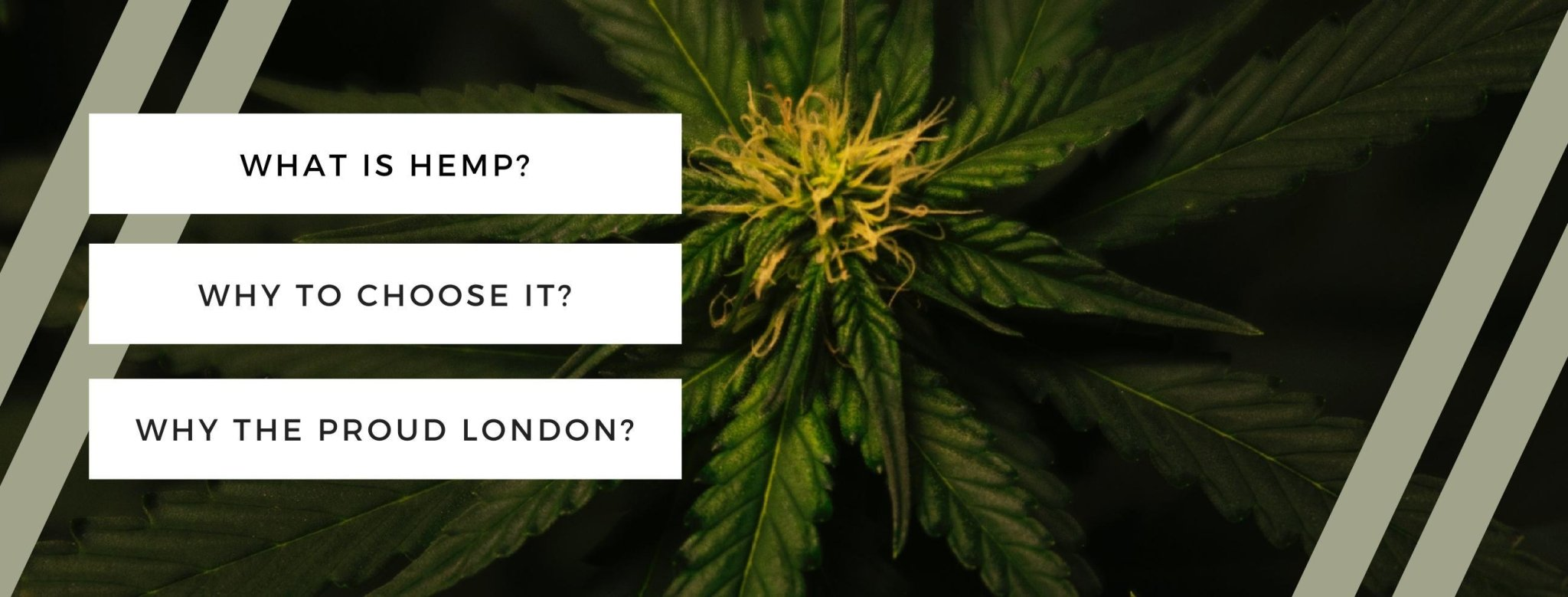 What is Hemp? Why choose Hemp? | TheProudLondon