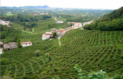 Vineyards in Asolo Italy