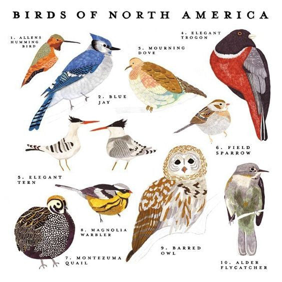 Birds of North America Print Poster