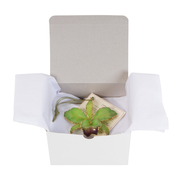 Green Real Cattleya Orchid Ornament Gift Boxed