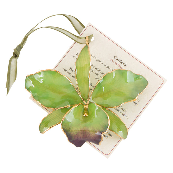 Green Real Cattleya Orchid Ornament with Green Ribbon and Hang Tag