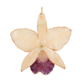 White with Purple Mouth<br>Real Cattleya Orchid Ornaments<br>Trimmed in Gold<br>Orchid Ornament Only - GoldRoses.com