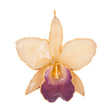 White with Purple Mouth Real Cattleya Orchid Ornament Front Side