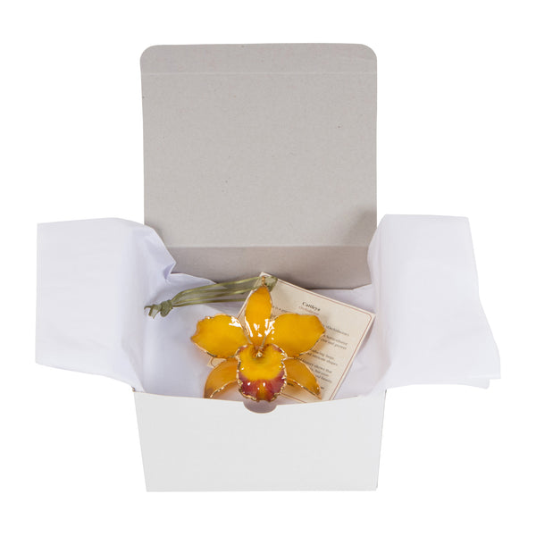 Yellow Real Cattleya Orchid Ornament Gift Boxed