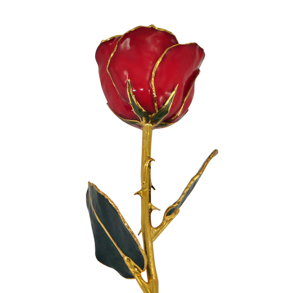 Real Burgundy Gold Trimmed Rose