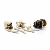 Halloween | Mini Skeleton Bones Set