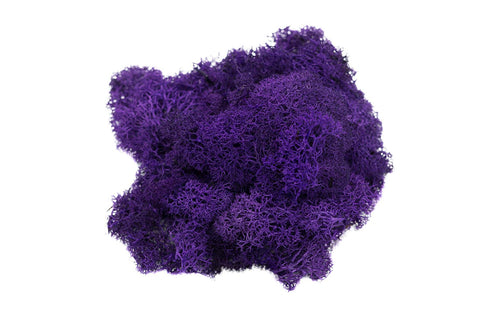 Purple Reindeer Moss
