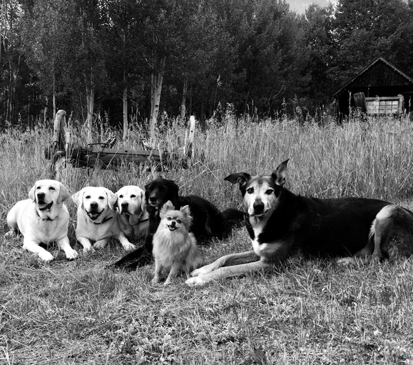 Annie, Reese and Toby with their cousins Meeka, Sasha and Jackson.