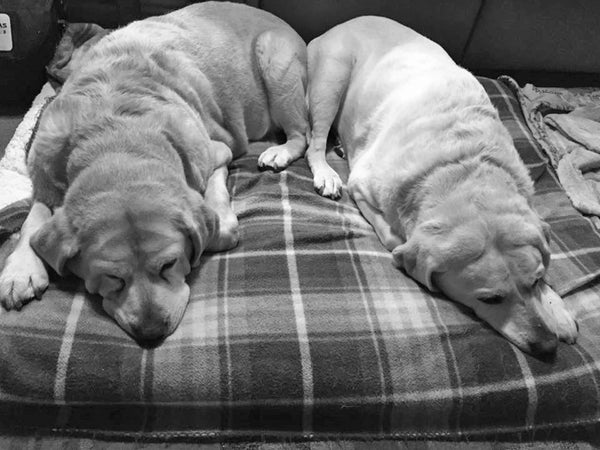 Our Snoring Seniors, Toby and Reese. This was a nightly event as Eric and I watched TV.