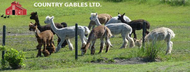Country Gables Alpaca Store