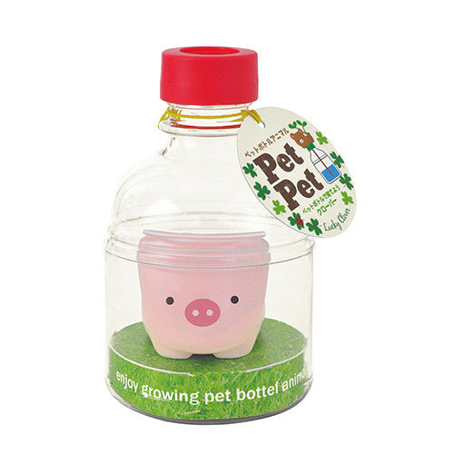 Pet Pet Pig White Clover