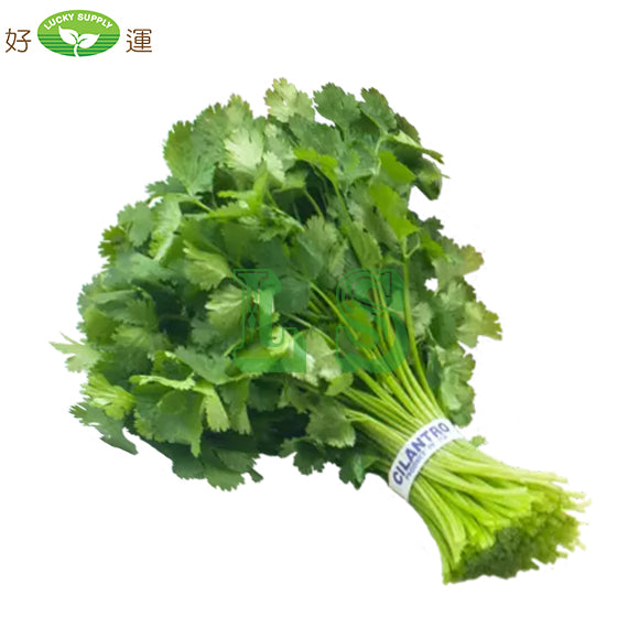 Cilantro Chinese Parsley