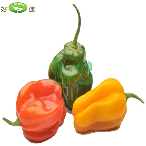 Red Jamaican Hot Pepper