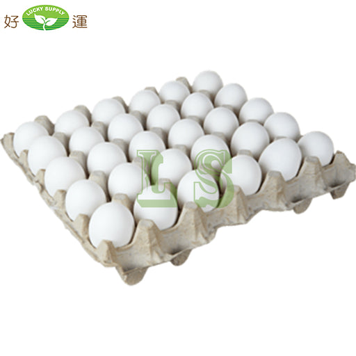 Extra-Large Egg (180PC)