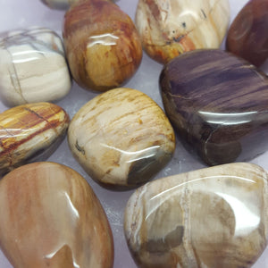 Petrified Wood Tumbled | Carpe Diem with Remi