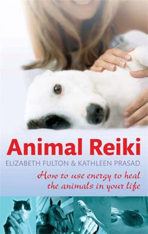 Animal Reiki | Carpe Diem with Remi
