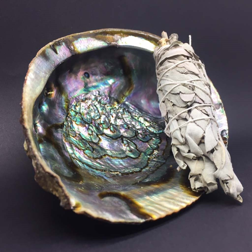 Abalone Shell | Smudging | Carpe Diem with Remi