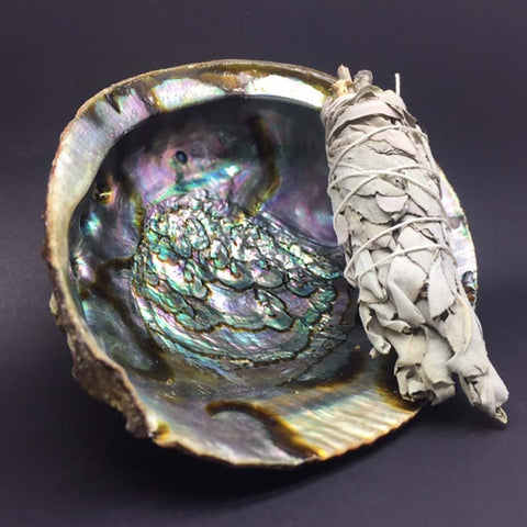 Abalone Shell for Smudging - Carpe Diem With Remi