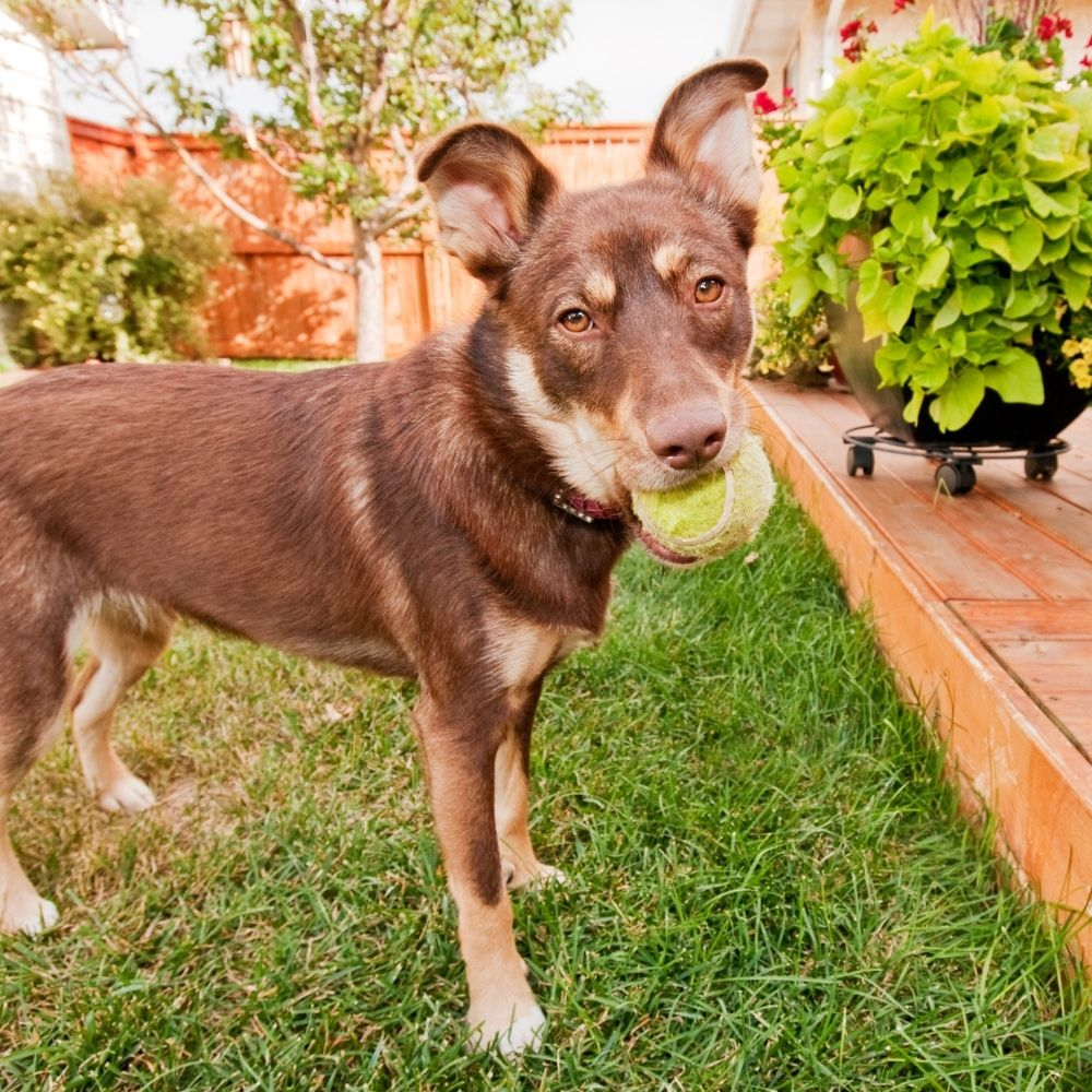 Top Tips For A Pet Friendly Yard
