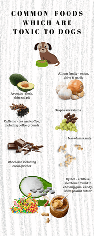 Common foods which are toix to dogs infographic Bonza Dog Treats