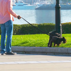 dog sniffing lamppost
