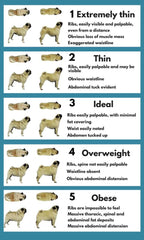dog body conditioning chart  - dog weight